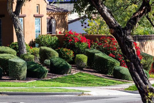 Manicured landscape yard in Arizona