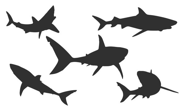 Vector shark silhouettes on a white background