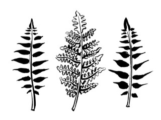 Fern leaves collection. Hand drawn field and forest plants in sketchy style. Vectorized ink illustration in black and white Fotobehang