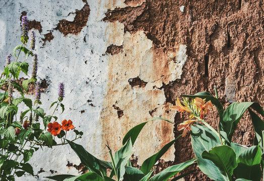 中国雲南の花のある古い家の壁 Processed with VSCO with aga1 preset