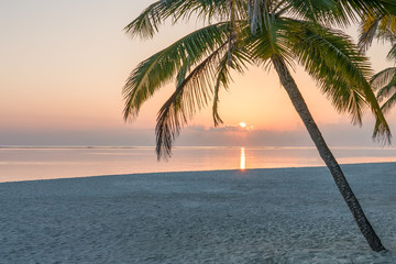 Wall Mural - Romantic sunset on a tropical island in the South Sea