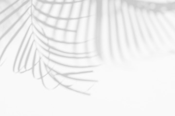Foto auf AluDibond Palms abstract background of shadows palm leaf on a white wall. White and Black.
