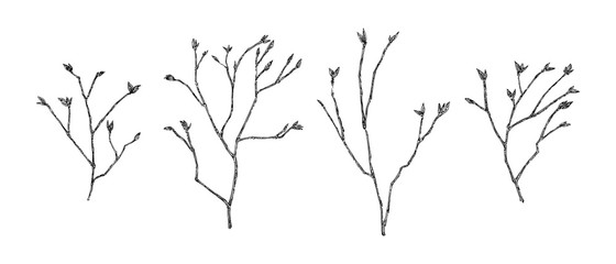 Hand drawn spring branches with tree buds set. Sketch style vector illustration. Black isolated botanical design elements on white background Fotobehang