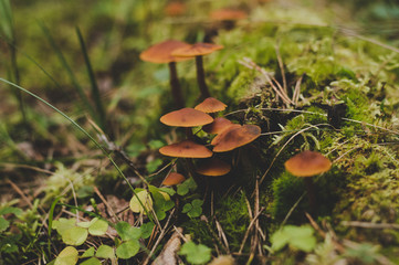Mushrooms in the forest close-up