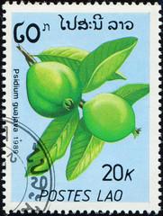 Printed kitchen splashbacks Chicken LAOS - CIRCA 1989: stamp 20 Laotian kip printed by Lao People's Democratic Republic, shows fruiting plant Psidium Guajava, flora, circa 1989