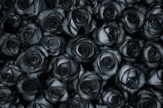 Many black roses are a top view. Vintage style background.
