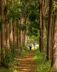 Senior adults walking on the Wai Koa Loop trail or track leads through plantation of Mahogany trees in Kauai, Hawaii, USA