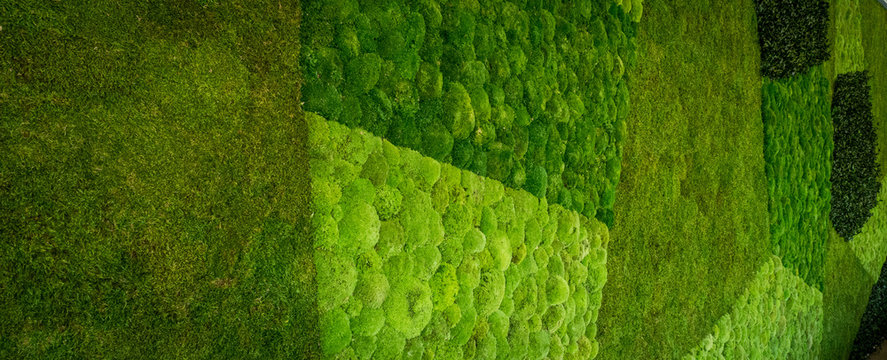 living moss wall abstract