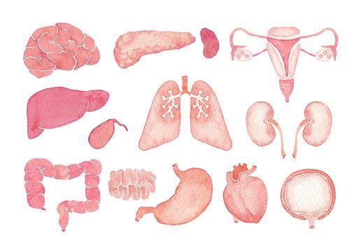 人体 臓器 内臓  アイコン セット 水彩 イラスト