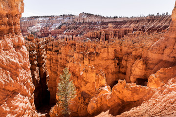 Colorful rock formations in Bryce Canyon in Utah, traveling in USA