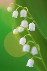 Photo sur Aluminium Muguet de mai Lily of the valley may flower on a green background with shining bokeh.Spring flowers. copy space. Spring floral gentle background.Flower card