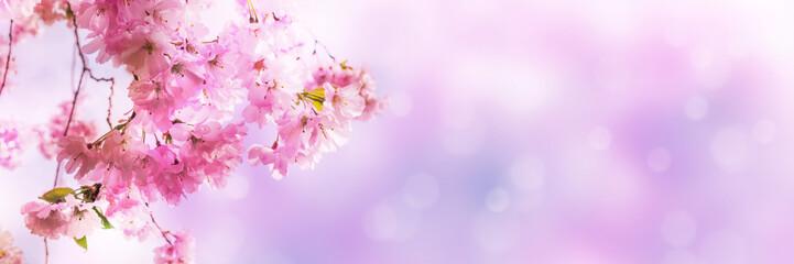 kirschblüten vor abstraktem hintergrund