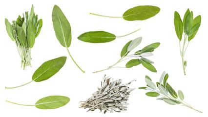 Fototapeta set of sage (salvia) leaves and herbs isolated obraz