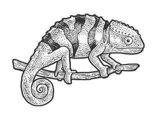 Chameleon lizard sketch engraving vector illustration. T-shirt apparel print design. Scratch board imitation. Black and white hand drawn image.