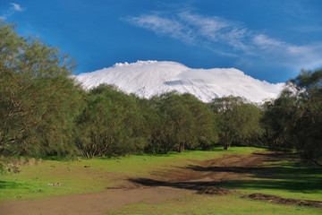 Wall Mural - Etna Mount snow covered from Plain of Brooms, typical vegetation of Etna Park in Sicily