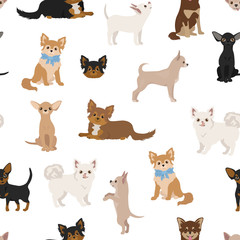 Chihuahua dogs seamless pattern. Different varieties of coat color set