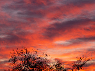 Foto auf Leinwand Hochrote sunset in forest