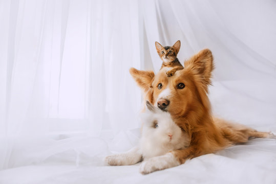 mixed breed dog posing with a kitten and rabbit indoors
