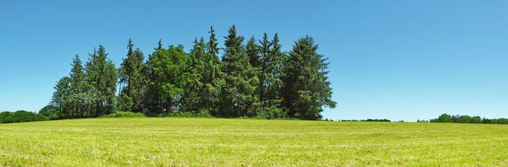 Fotoväggar - Waldstück im Sommer