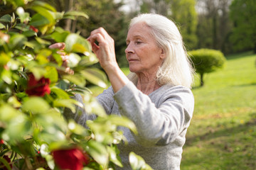 Senior woman picking rose flowers while standing in garden