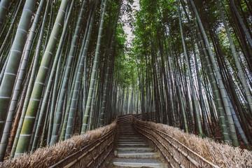 path through a bamboo forest
