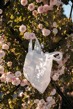 Plastic bag hanging on rose bush