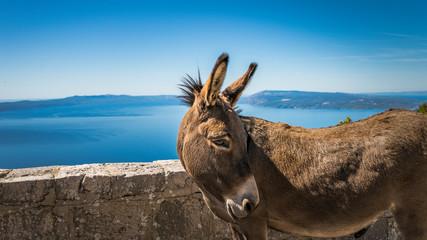 Foto auf Leinwand Esel Esel mit Aussicht