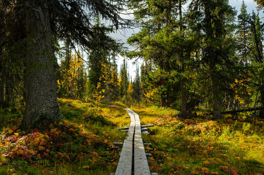 hiking path in swedish forest