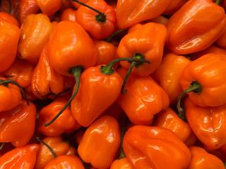 Hot,hot,hot habaneros