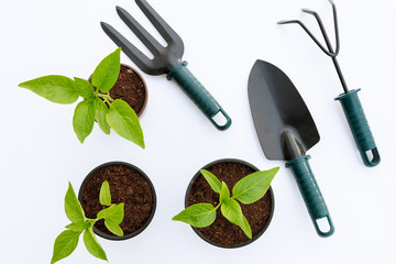 Vegetable seedlings and garden tools isolated on white