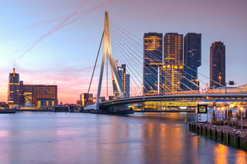 Poster Swan Erasmus bridge over the river Meuse in Rotterdam