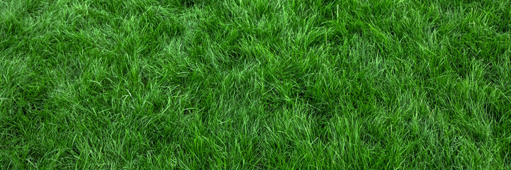 Natural green grass background, fresh lawn top view