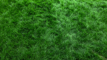 Door stickers Grass Natural green grass background, fresh lawn top view