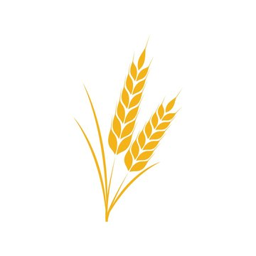 Wheat icon Vector Illustration design Logo