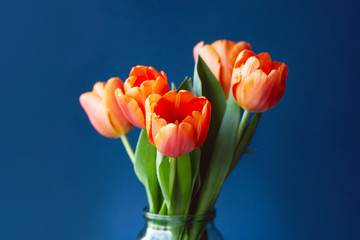 Bouquet of tulips in orange colors on trendy blue background. Concept of spring, Women's Day,...
