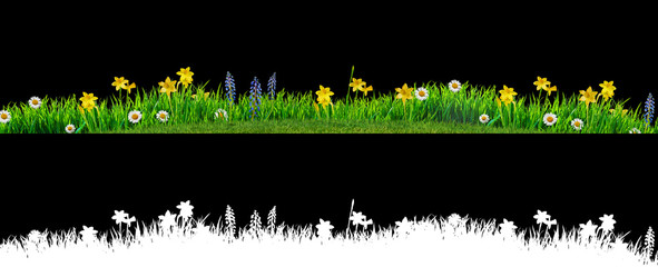 spring grass and daisy wildflowers isolated with clipping path and alpha channel