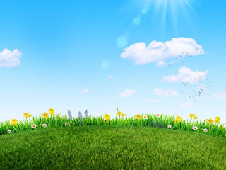 Wall Mural - green grass and spring flowers at backyard background