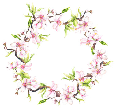 Watercolor painted white cherry blossoms. Isolated floral wreath arrangement illustration.