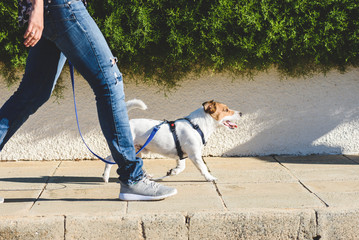 Dog walker walking fast with her pet on leash at street pavement