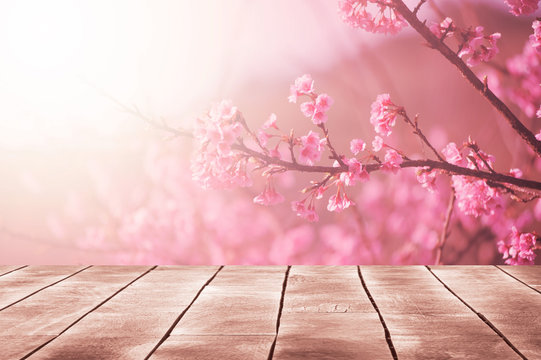 Spring seasonal of pink sakura branch with wooden table stand ,flower background