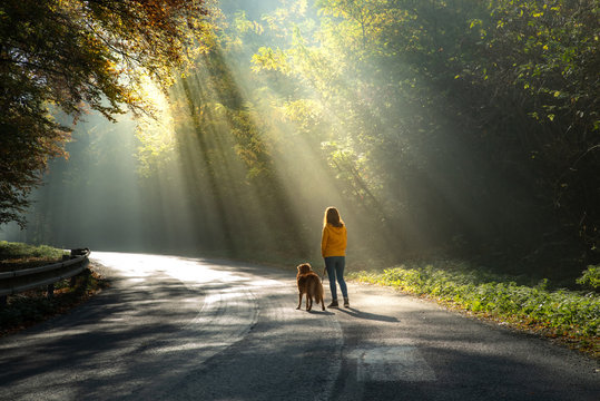 women with a dog together. sun light on the road. girl and a red toller retriever on a walk.