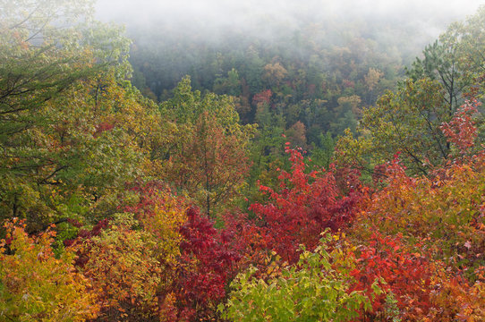 Autumn landscape in fog from the West Foothills Parkway, Great Smoky Mountains National Park, Tennessee, USA