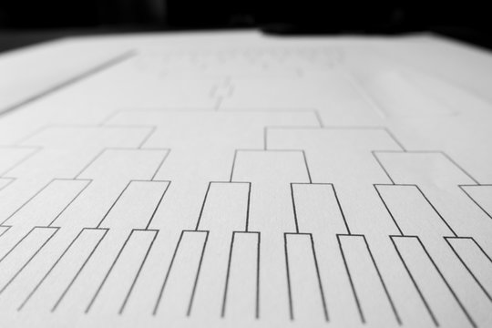 Blank sprots bracket grid on white paper and close focus