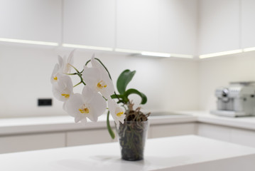 Door stickers Orchid Close up of Orchidee or phalaenopsis in bright modern kitchen with white countertops