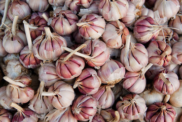 heads of garlic for sale