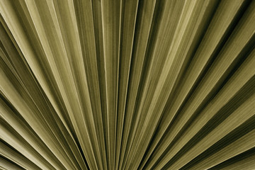Wall Mural - tropical palm leaf and shadow, abstract natural green background, dark tone textures