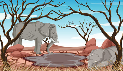 Poster Kids Dying elephants in drought land