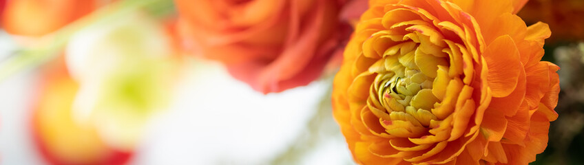 Beautiful nature view of flower on blurred background with copy space for text using as summer...