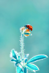 Foto op Plexiglas Vlinder Beautiful ladybug on leaf defocused background