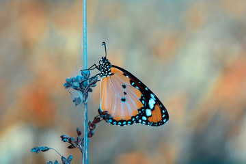 Foto op Plexiglas Vlinder Closeup beautiful butterfly sitting on the flower.